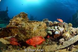 fish n wreck by Ilker Acar