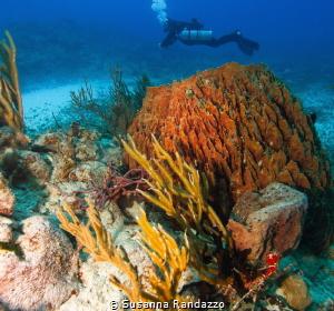 diving in Playa del Carmen by Susanna Randazzo