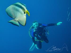 bad-diver by Marc Van Den Broeck
