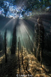 Light in the mangroves by Leena Roy