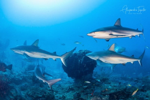 Sharks and the Reef, Gardens of the Queen Cuba by Alejandro Topete