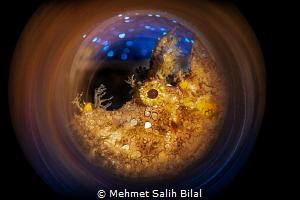 Rhinopias frondosa. by Mehmet Salih Bilal