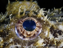 Eye and shrimp by Walter Bassi