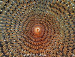 Worm hypnosis by Walter Bassi