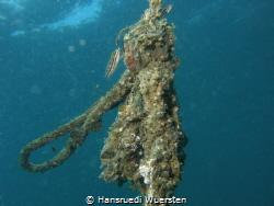 A simpel rope get populated by Hansruedi Wuersten