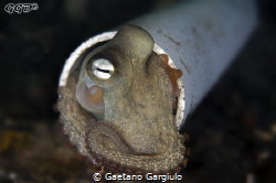 Octopuses are fluid, hence they flow in pipes by Gaetano Gargiulo