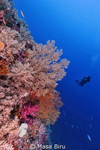 wonderful corals by Masa Biru