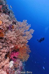 wonderful corals by Masa Biru
