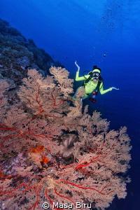 perfect coral by Masa Biru
