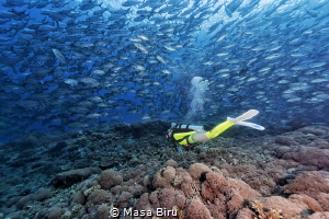 diver and jackfish by Masa Biru