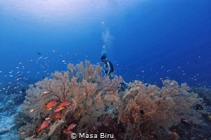 wonderful coral by Masa Biru