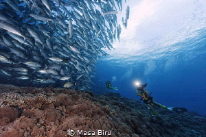 diver and jack fish by Masa Biru
