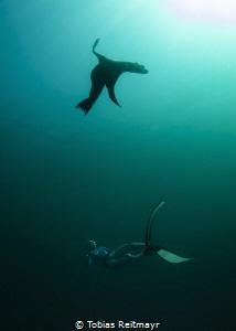 Freediver with Sea Lion by Tobias Reitmayr