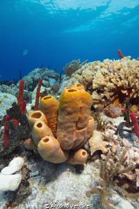 Jardines reef dive, Playa del Carmen, Mexico by Antonio Venturelli
