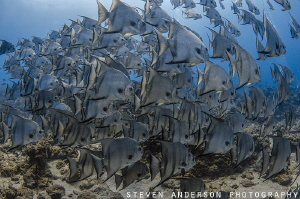 Diving off West Palm Beach always provides a special site... by Steven Anderson