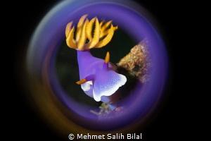 Chromodoris bullocki by Mehmet Salih Bilal