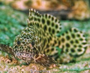 fish by Masa Biru