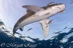 A snapshot after this oceanic whitetip blindsided me by Morgan Riggs