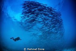 Barracudas and diver by Mehmet Emre