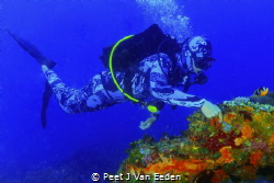 In Amazement Scuba diver is amazed by the beauty of a sm... by Peet J Van Eeden