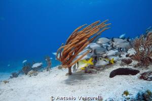 Jardines reef dive, Playa del Carmen by Antonio Venturelli