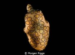 Elegance by Morgan Riggs