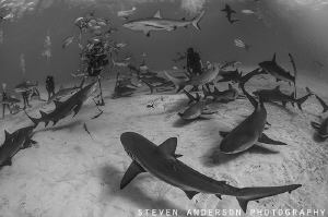 Sharks and more sharks arrive with our presence at Tiger ... by Steven Anderson