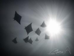 devils in the air by Marc Van Den Broeck