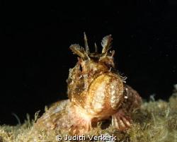 night dive @ Costa Brava El Golfet by Judith Verkerk