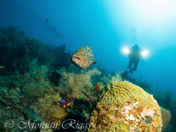 Gates Lights chasing a grouper by Morgan Riggs