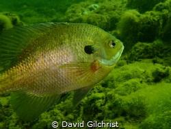 Sunfish by David Gilchrist