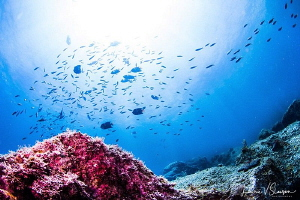 Underwater view at Isla San Pedro Nolasco/Photographed wi... by Laurie Slawson