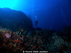 Diver at French Cap Island, U.S. Virgin Islands by Pauline Walsh Jacobson
