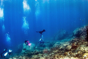Divers With Sea Lion/Photographed with a Tokina 10-17 mm ... by Laurie Slawson