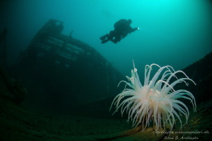 Konsul Carl Fisser WW2 wreck in Ålesund, Norway.