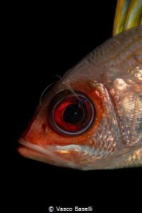 Cleaner shrimp at work on this Big Eye (literally). by Vasco Baselli