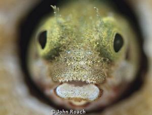 The cirri goatee!!! by John Roach