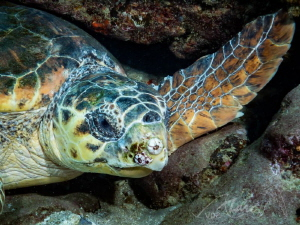 turtlewing by Marc Van Den Broeck