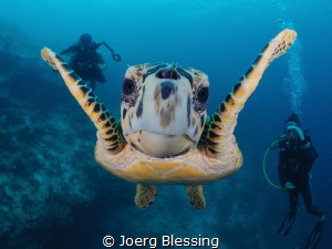 More then friendly turtle. It already knew rule number on... by Joerg Blessing