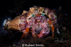 Did you know that hermitcrabs have 'social networks' to f... by Robert Smits