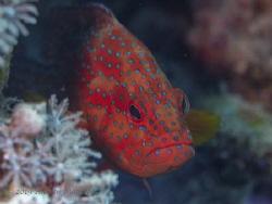 Grumpy fish... by Andrew Macleod