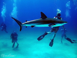Shark?  What Shark?/Photographed with a Canon G11 at the ... by Laurie Slawson