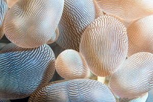 Bubble Coral/Photographed with a Canon 60 mm macro lens a... by Laurie Slawson