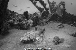 Crocodile fish in the wreck bnw edition by Deniz Muzaffer Gökmen