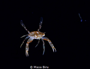 crab by Masa Biru