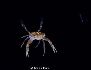 crab by Masa Biru