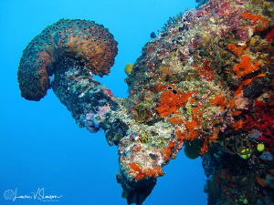 Reefscape in Fiji/Photographed with a Canon G11 at Wanana... by Laurie Slawson