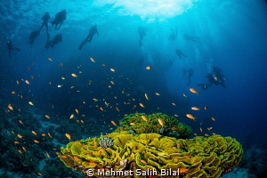 Safety stop at the end of a fantastic dive in Ras Mohamme... by Mehmet Salih Bilal