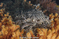 In a bed of Roses. 