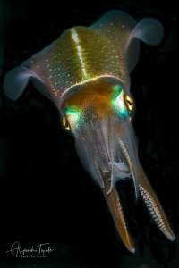 Squid in Black, Veracruz México by Alejandro Topete